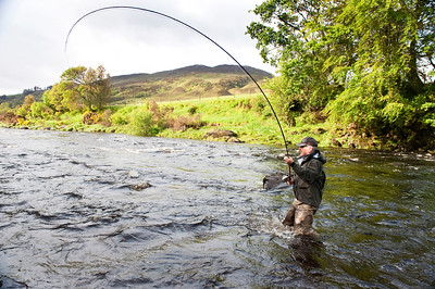 Fly fisherman plays salmon on River Finn, Donegal, Ireland