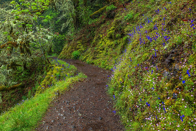 Eagle Creek Trail Columbia River Gorge, Oregon