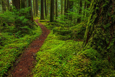 A danky green trail Baker Lake, Washington