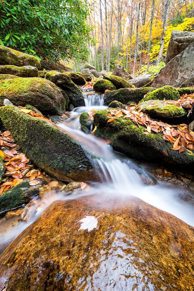 Intricate Fall