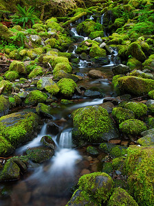 Sol Duc Stream with Moss on rocks