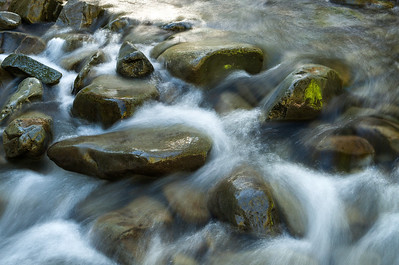Flowing stream, Hoh Rainforest. Olympic National Park
