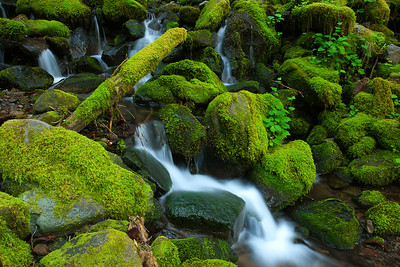Sol Duc Stream, Olympic National Park