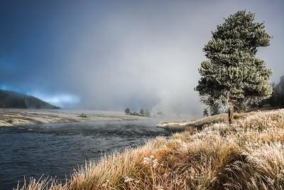Sunlit Frosty Tree