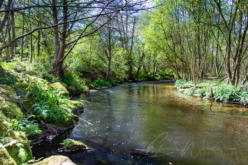 Along the edge of a working quarry the crystal clear waters of the river bovey meander through a young woodland