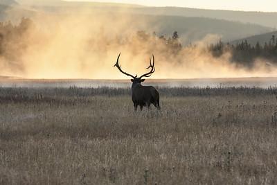 Elk Mist