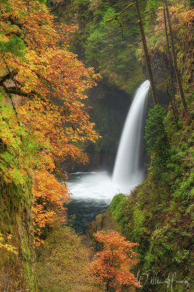 Autumn in the Gorge