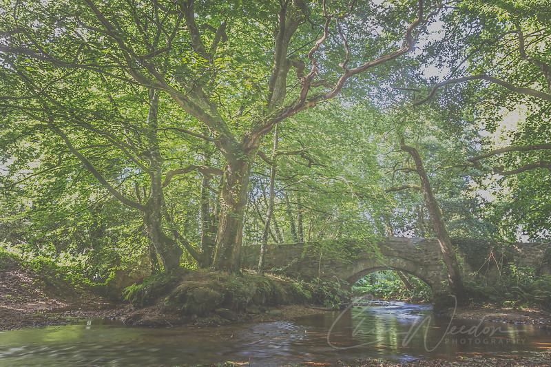 Close to North Bovey at a place called Lakeland the river Bovey flows under an old stone bridge and past an ancient oak tree