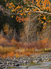 Autumn on East Carson river 2