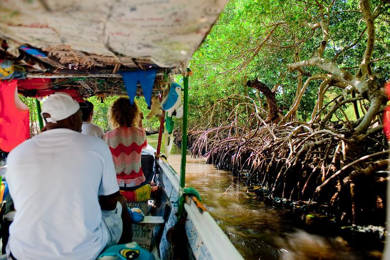 Through the Mangroves in Jones Ville