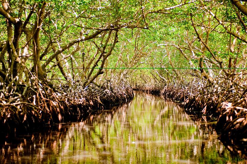 Through the Mangroves in Jones Ville via water taxi.