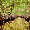 Through the Mangroves in Jones Ville via water taxi.
