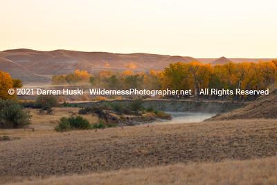 Milk River and Cottonwoods near Havre, Montana