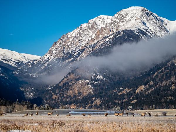 Elk beneath Mt Chapin