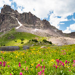 Wildflower Panorama