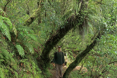 "Along the Aniwaniwa Falls Track, the SW slope of Mt. Kokipo - Te Urewera (now a ""Personhood"" of the Tohoe people), once a National Park until 2014 - Hawkes Bay region - North Island - New Zealand."