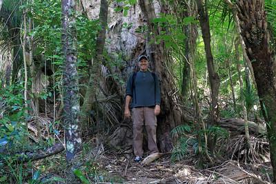 Waitakere Ranges Regional Park - Piha Domaine - Auckland region (western area) - North Island - New Zealand.