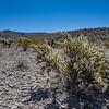 Arizona végétation