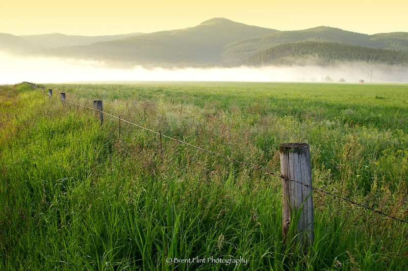 DF.295 - meadow and Hoodoo Mountain at sunrise, Bonner County, ID.