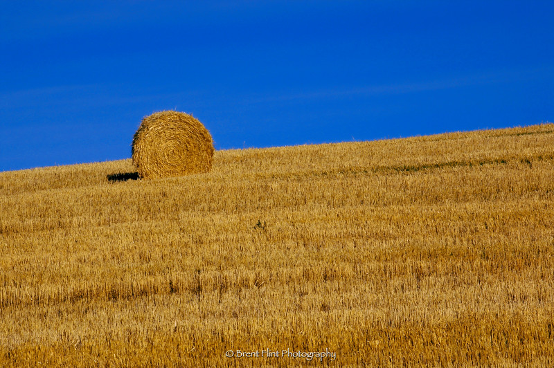 DF.343 - hay bail on prairie, Molsen, WA.