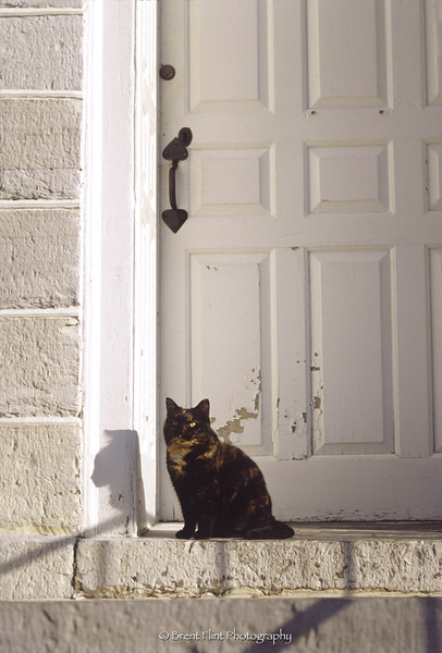 S.3574 - cat in doorway, Shaker Village at Pleasant Hill, KY.