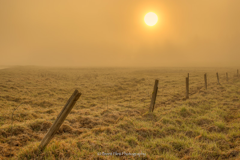 DF.3923 - fenceline at sunrise through fog, Bonner County, ID.