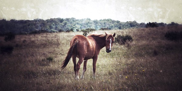 Long Plain Brumby ~ WIDE VIEW