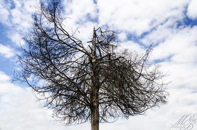 Dead Tree and Sky New Burlington Cemetery