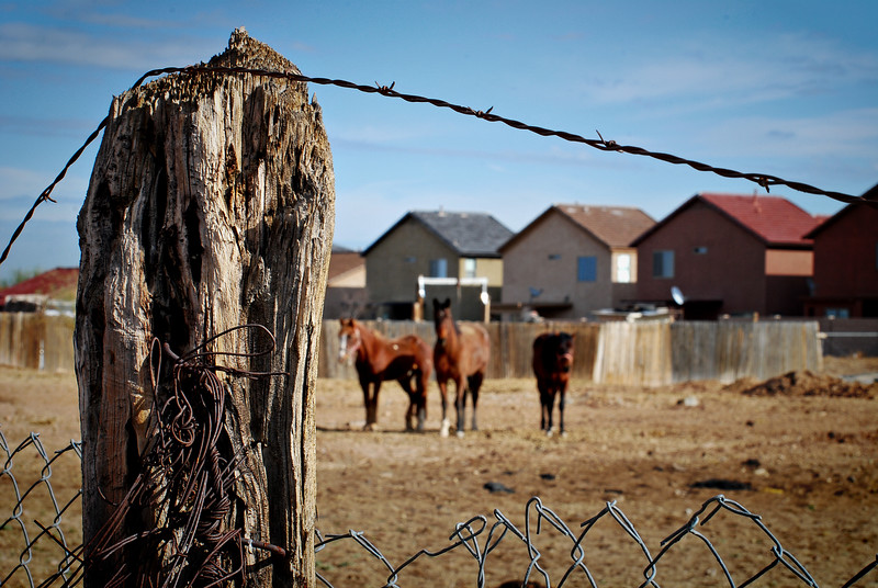 Rural Verses Urban: Fence Post and Laveen Horses
