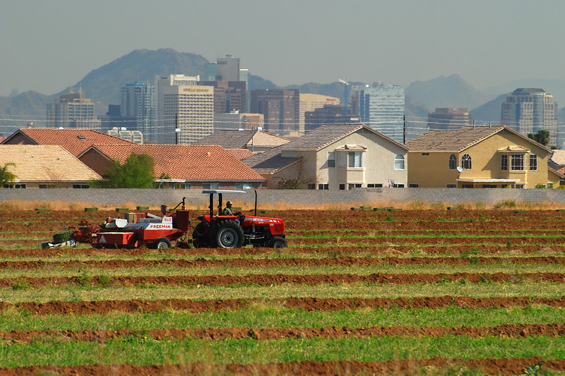 Rural vs. Urban: Phoenix