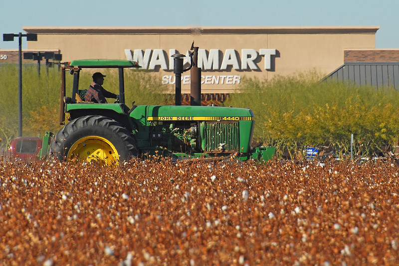 Rural vs Urban: Cotton Harvest <br /> Laveen, Arizona