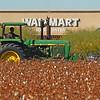 Rural vs Urban: Cotton Harvest <br /> Laveen, Arizona
