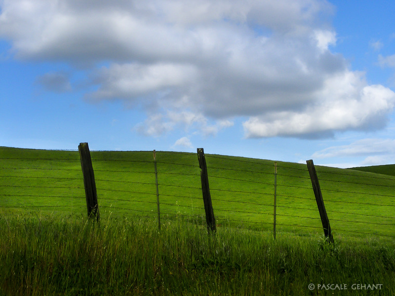 Green grass behind the fence