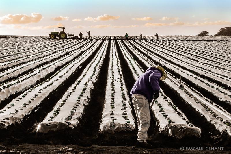 Irrigation installation 4