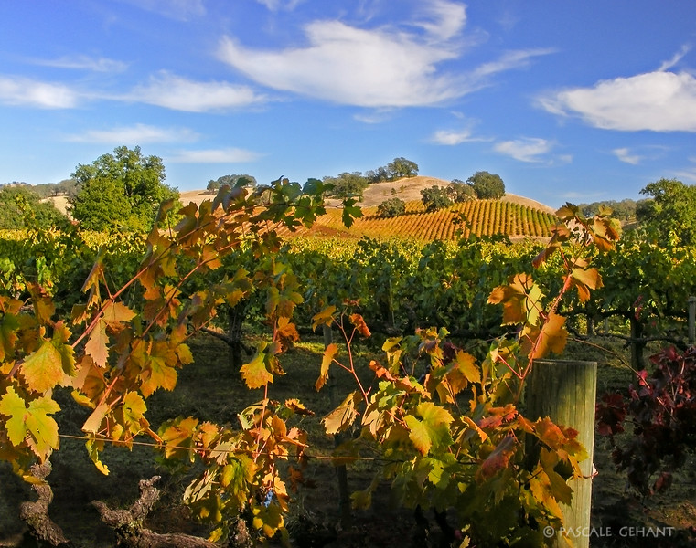 Vineyards on the hill 2