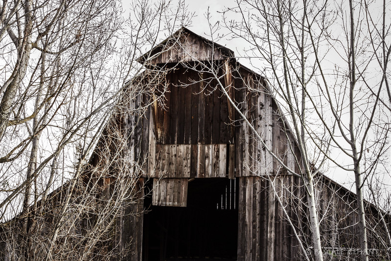 Old barn with trees