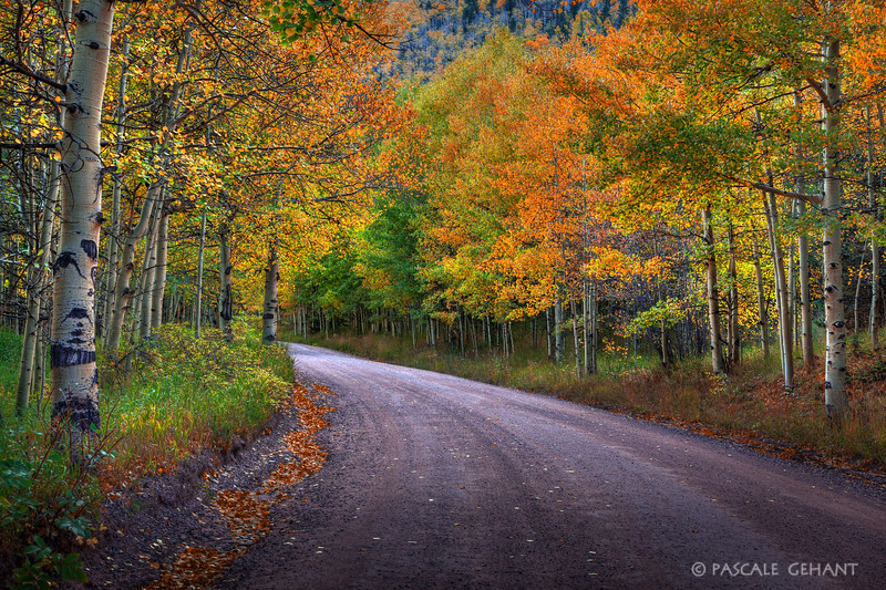 Autumn follows the road