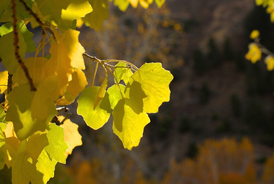 I really like the focus on the backlit yellow-green leaves.  i would shift them further left into the left third. This would bring the distant blurred leaves int the top right side of the photo further into the frame and give the whole photo some more balance.