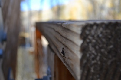 Nice photo, great narrow depth of field that really highlights the spider in the image.  The assignment was to work on a broad depth of field, but I like the way you used the opposite here.