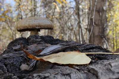 This is a better depth of field example.  Do you know what your F-stop was on this image?  Ideally you would set your focus just in front of the mushroom if you wanted to include the background elements...