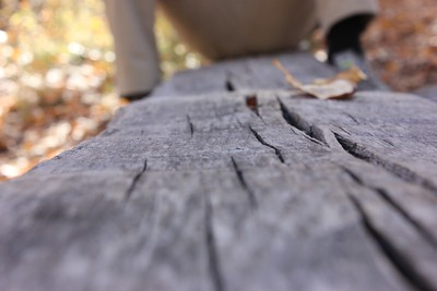 I like the narrow slice of wood detail.  I could do without the blurred crotch shot at the end of the log.  Glad you used a narrow depth of field here instead of a broad depth of field... ; )