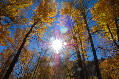 I like the sun star.  The trees are a little blurry.  Be sure to pay attention when on auto focus and looking into the sun.  It can sometimes give the auto focus fits so maybe you would choose to manual focus.