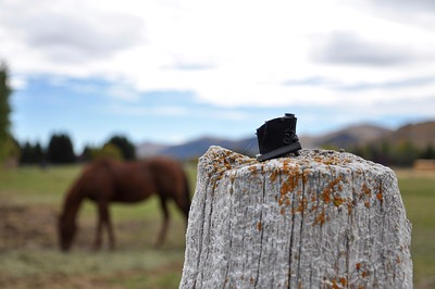 Nice use of the narrow depth of field to draw the focus into the spider web and fence post.  Ideally, the entire horse would be visible and not blocked by the fence post.  You could also move spider web down and right, even cropping the right side of the fence post out of the lower right corner of the photo.