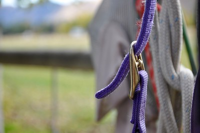 Nice shot.  I like the composition, especially how it keeps the purple rope/buckle in front of the other (through blurred) ropes.  It is too bad we didn't have more cool rope and leather work to work with.