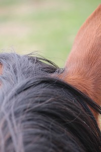 I like the abstract nature of this image.  Ideally, the horses mane would be well groomed to augment the flowing nature of the hair lines.  You can see, however, that having the main focal point in the distance can make is feel a bit diminished.  If you had focused on the dark hair, a larger portion of the image would be in the narrow plane of focus.  Claire's picnic bench photo is another example of this.