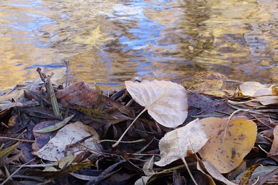 Nice capture.  Good depth of field example.  Perhaps move the leaf/water junction to the upper or lower third...?