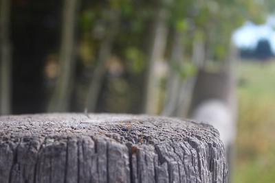 Cool.  Super narrow depth of focus.  Perhaps it would be a bit better if you were looking down onto the top of the fence post a bit more, set the plane of focus on the front edge of the log, or close the aperture down a bit more to broaden the range of focus.