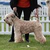 Limit Dog<br /> 1st & DCC - Eblanahalls Silkbeard At Raisingsands