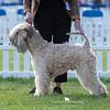 Open Dog<br /> 3rd - Flaxela Living Legend Of Gwendonydd