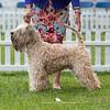 Special Vintage Dog  (10 + Years)<br /> 1st - Ch Janeyjimjams Jenson JW SHCM